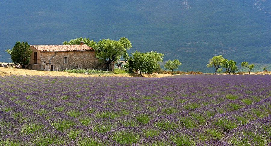 Landscape_Provence_France_1.jpg