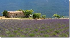 Landscape_Provence_France_1_thumb.jpg
