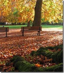Laub_im_Stadtpark_thumb.jpg